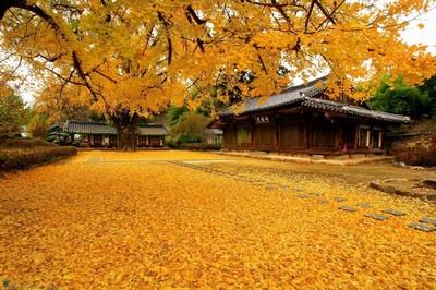 Mùa thu Hàn - Nhật
