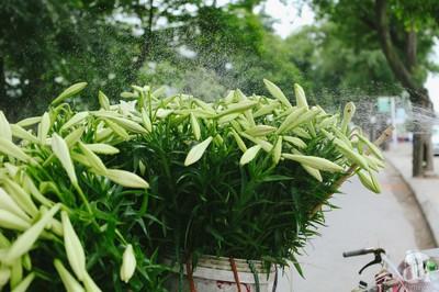 Hà Nội đẹp ngỡ ngàng trong sắc trắng tinh khôi của loài hoa tháng tư