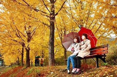 Đặc sắc tour du lịch mùa thu cùng GalaTravel