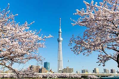 Khám phá những điểm đến 0đ tại thủ đô Tokyo tráng lệ