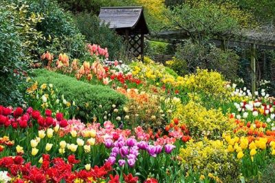 Đà Lạt - thành phố của ngàn hoa
