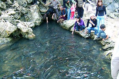 Suối cá thần Cẩm Lương - Điểm đến hấp dẫn của vùng đất xứ Thanh