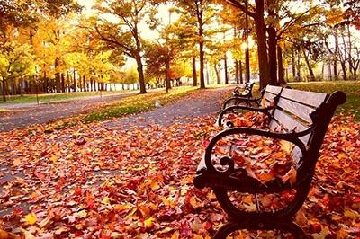 Ngất ngây trước vẻ đẹp mùa thu Hàn - Nhật