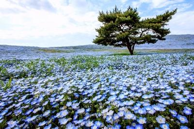 Chương trình tour du lịch Nhật Bản từ Tp. HCM: Tham quan Tokyo - Ibaraki - Hakone - Yamanashi - Fuji - Narita | 4 ngày 3 đêm