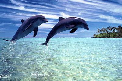 Du Lịch Maldives: HCM - Thiên Đường Biển Maldives | 4 ngày 3 đêm