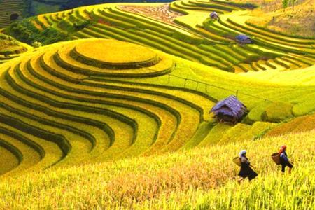 Khám phá Đông Bắc mùa lúa chín: Hà Nội - Hoàng Su Phì - Xín mần - Bắc Hà