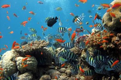 Chương trình tour du lịch Phú Quốc: Đi bộ khám phá Đại Dương | 1 ngày