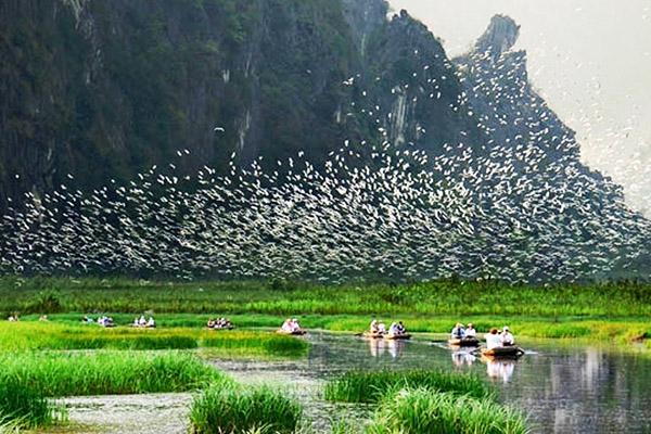Tour Du Lịch Ninh Bình: Bái Đính - Tràng An - Vườn Chim Thung Nham | 2 ngày 1 đêm